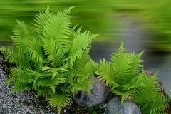 plant-2388823_640